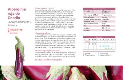 Albergínia roja de Gandia