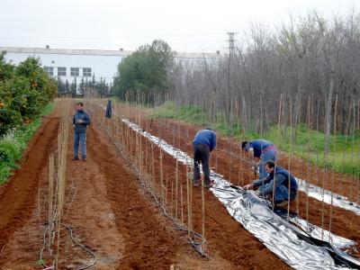 Plantación en el CIEF.