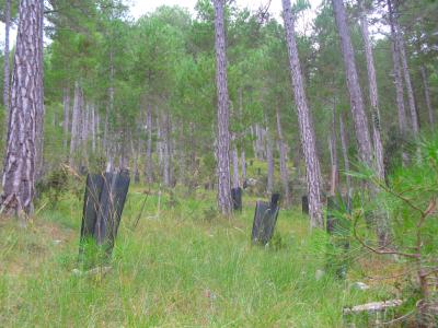 Plantación en restauración ecológica de ecosistemas.