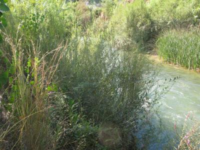 Plantacions en Pedralba, un any després.