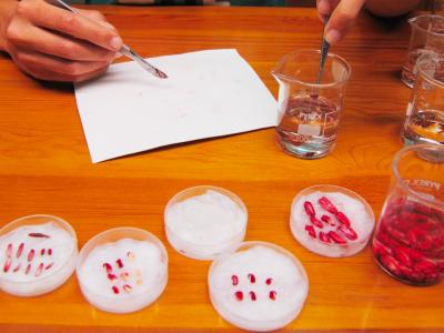 Anàlisi de viabilitat amb test de tetrazoli.