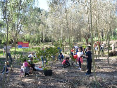 Plantació de Frangula alnus amb escolars.
