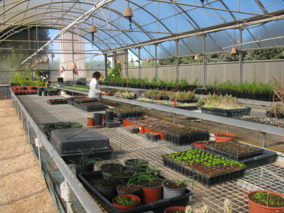Hivernacle amb planta de flora amenaçada.