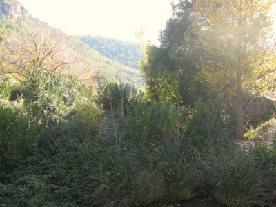 Microreserva Riberes del riu Tuéjar.